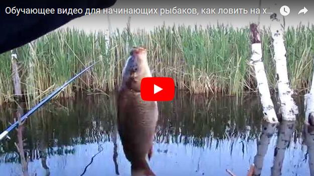 Как поймать рыбу для начинающих